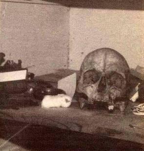 Robert_Sheldons_Skull